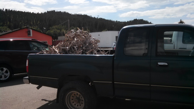 Truck full of antlers
